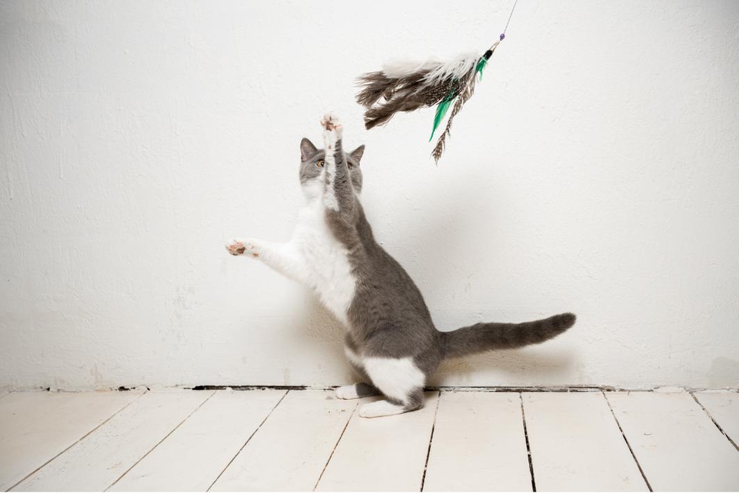 katten spelen graag met speeltjes aan een speelhengel