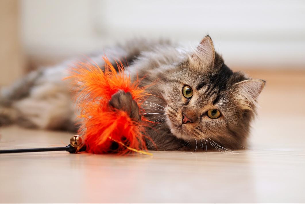 kat speelt op de grond met een fluffy kattenspeeltje